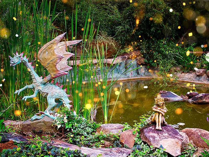 A Dose of Fairy Dragons