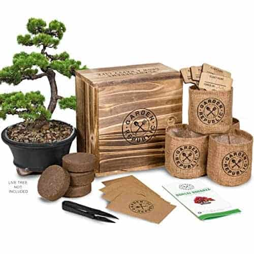 Bonsai Tree Seed Starter Kit Mini Bonsai Plant Growing Kit 4 Types Of Seeds Potting Soil Pots Pruning Shears Scissor Tool Plant Markers Wood Gift Box Ebook Indoor Garden Gardening Gifts