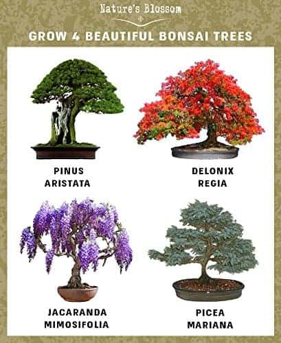 Nature S Blossom Bonsai Tree Kit Grow 4 Types Of Miniature Trees From Seed A Complete Indoor Gardening Seed Starter Set With Organic Tree Seeds Soil Planting Pots Plant Labels And Growing Guide