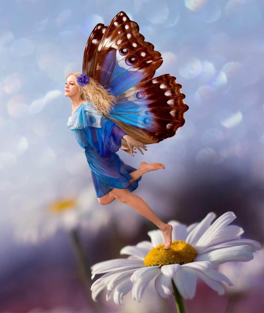 fairy on daisy