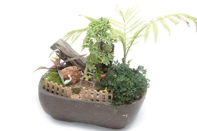 Fairy Garden Themes Dad Will Love