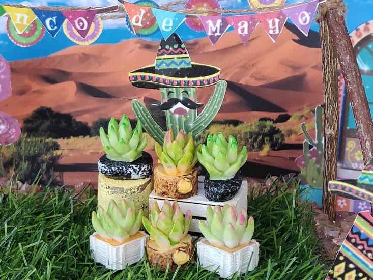 adorable too cute cactus, miniature