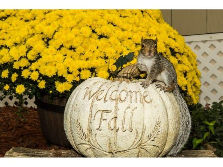 Discover Magical Autumn Miniatures for Your Fairy Garden